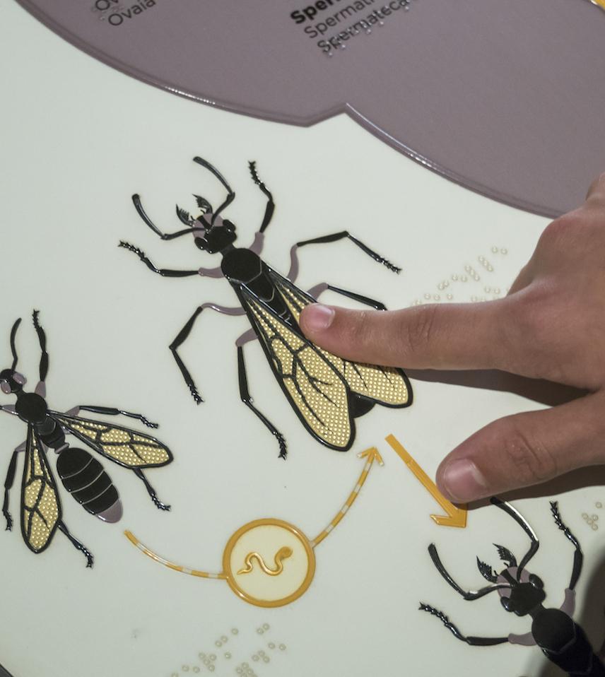 illustration visite sensorielle fourmis