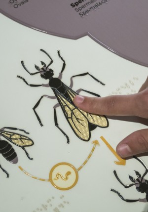illustration visite sensorielle fourmis